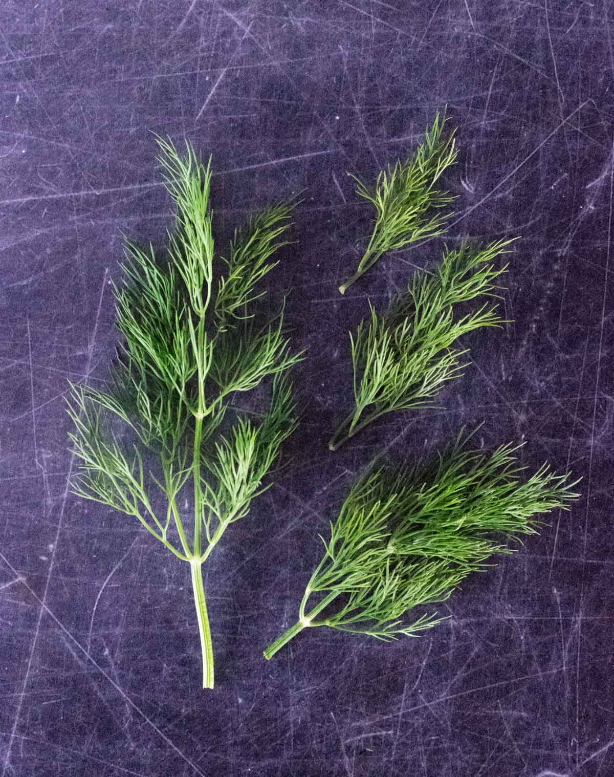 Fresh dill sprigs shown from above.
